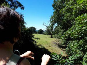 Middlewood Way, A Field Between Higher Poynton & Bollington