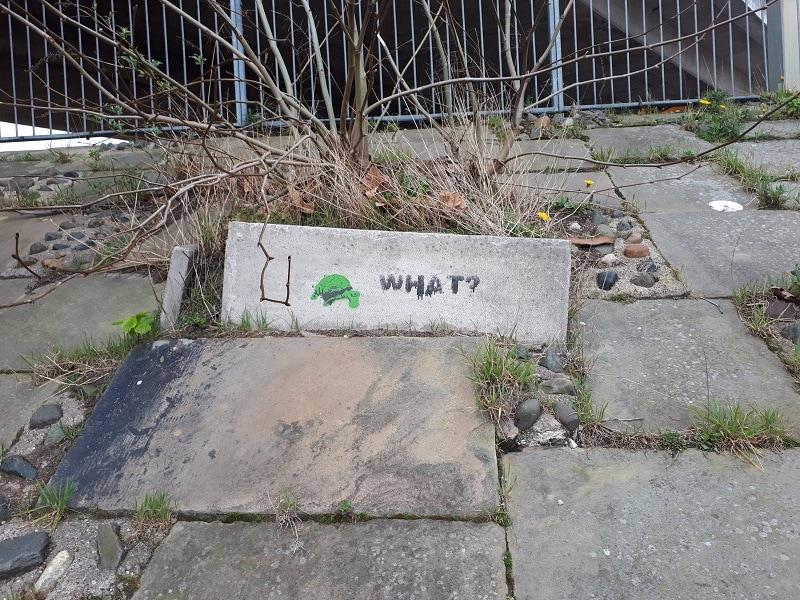 Chester Tortoise Graffiti. Garden Lane Underpass, 23/3/19