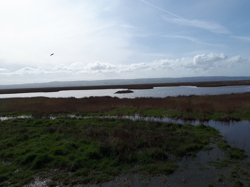 Parkgate Marshes, looking west across the Dee Estuary towards Wales. 23/3/19.