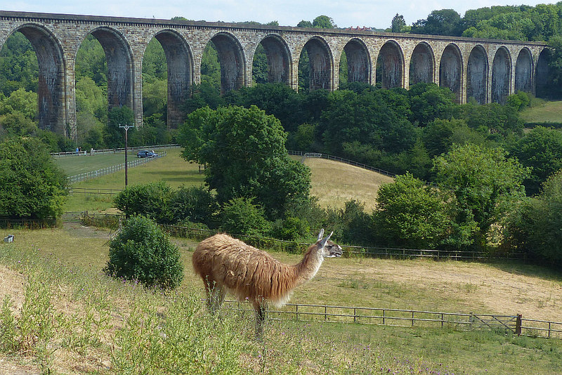 Cefn Mawr Viaduct by Robin Drayton over on Geograph.co.uk